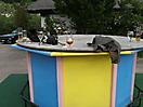 Treffen Gosau 2012 - 023